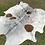 Thumbnail: Cowhide 29