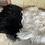 Thumbnail: Natural long wool icelandic Single Sheepskin