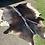 Thumbnail: Cowhide 03