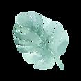 Folhas tropicais 4