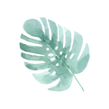 Les feuilles tropicales 4