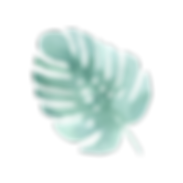 熱帯の葉4