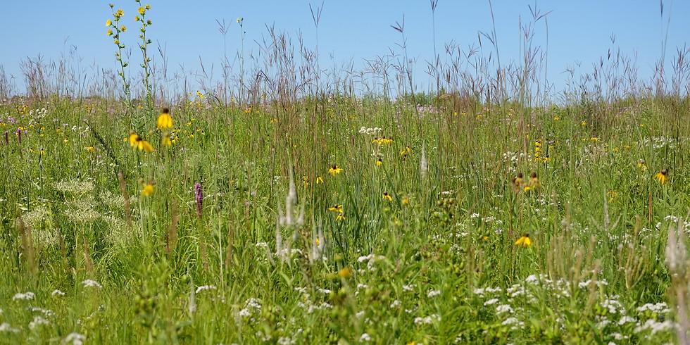 Pollinators and Prairie Walk