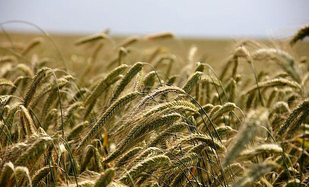 field-196173_1280.jpg