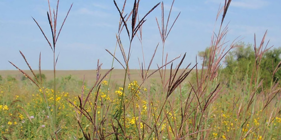 Prairie Grasses and Things That Grow in Them