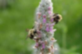 Bumble Bees Emilie Janes.jpg