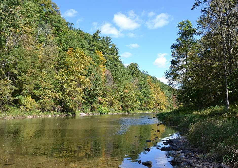 Creek Side View
