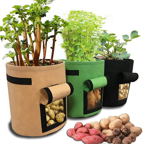 Tomatoes Potato Grow Bag