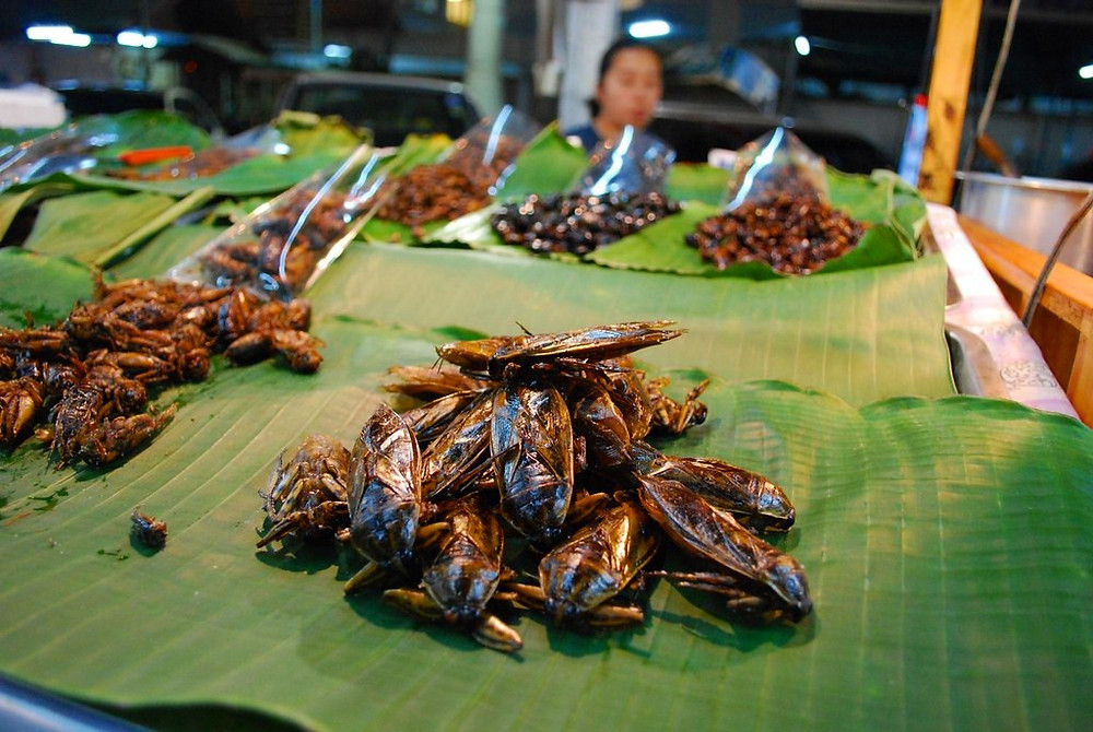 Giant waterbug food | Pattaya | Thailand