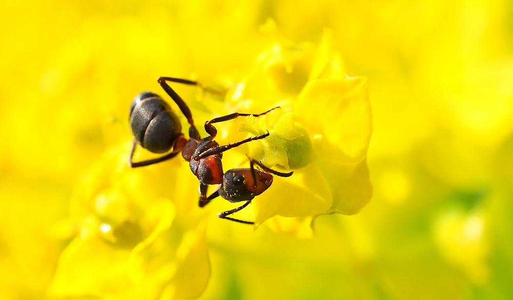 Pattaya Thailand Ants