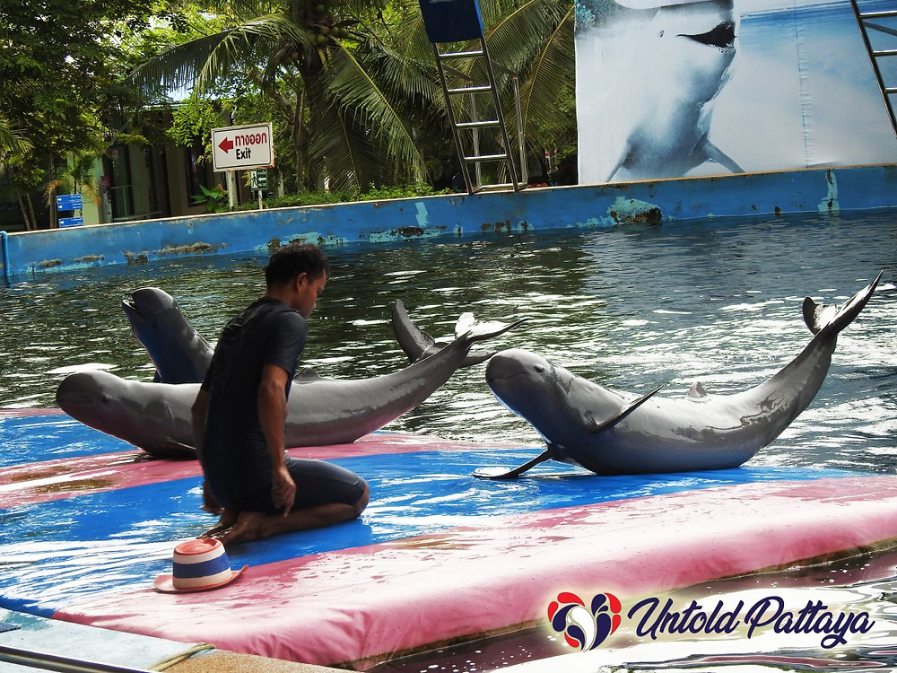 Dolphin World, Pattaya Thailand