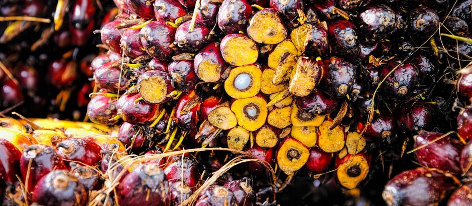 Breaking the false narrative against Palm Oil