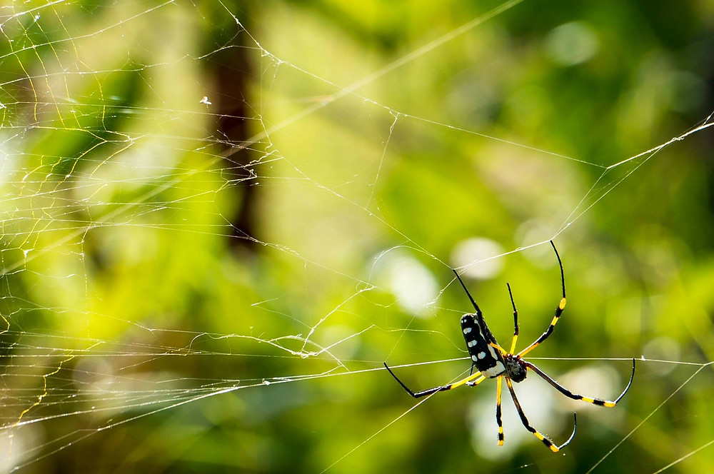Pattaya Thailand Spiders