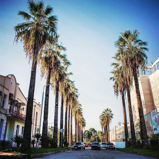 Palm Trees in Abkhazia