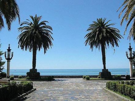Palm trees on the Black Sea