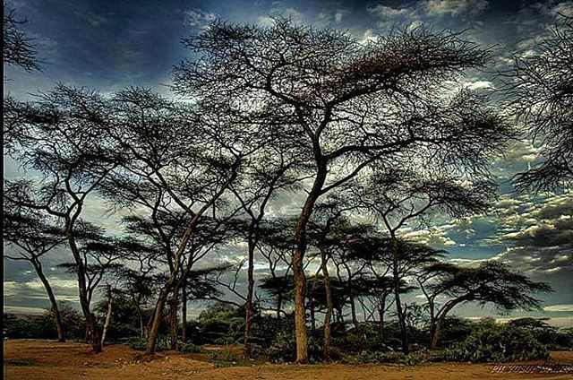 Trees and nature in Somaliland
