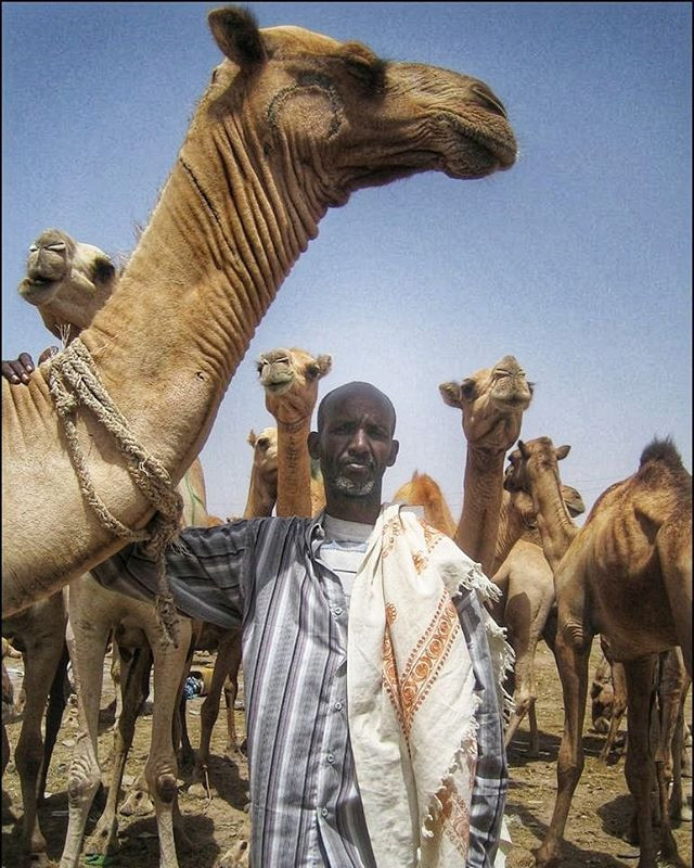 Hargeisa Camel Market in Somaliland