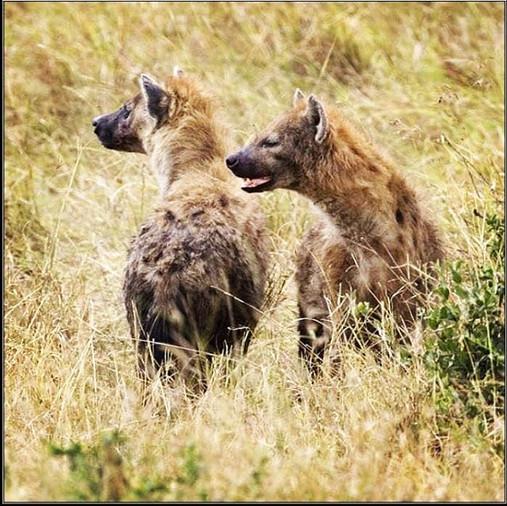 Somaliland Wildlife
