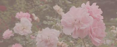 pinkroses2.png