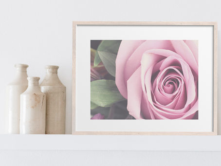 Free Printable Photography Art Print: Lavender Rose