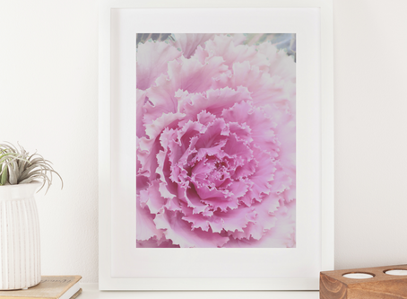 Printable Photography Art Print: Ornamental Cabbage