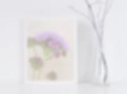 purpleflowerpic.png