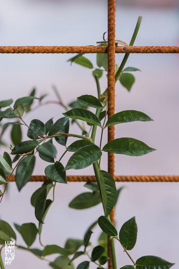 Trädgårdsgalleri.jpg