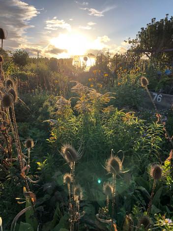 Odling, trädgårdsarbete