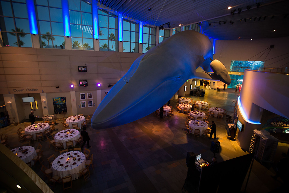 Long Beach Aquarium Wedding Edie Blue Whale