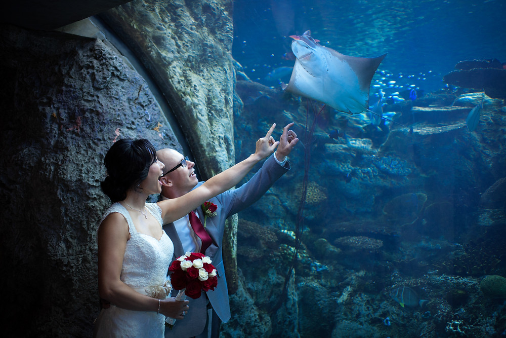 Long Beach Aquarium of the Pacific Stingray Wedding couple