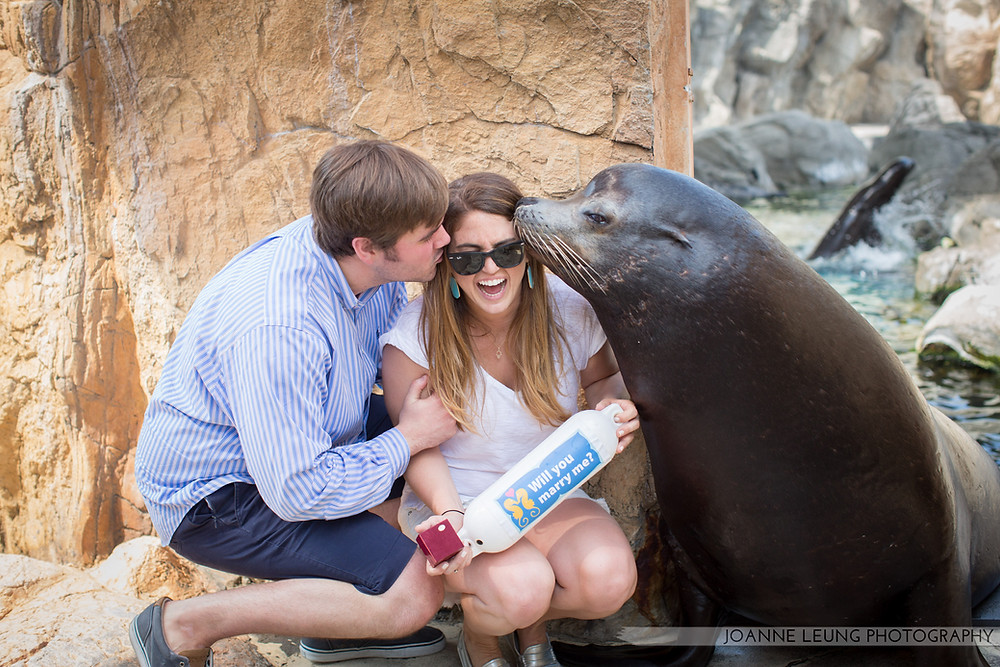Long Beach Sea Lion Experience Proposal Photography Heart Bandits