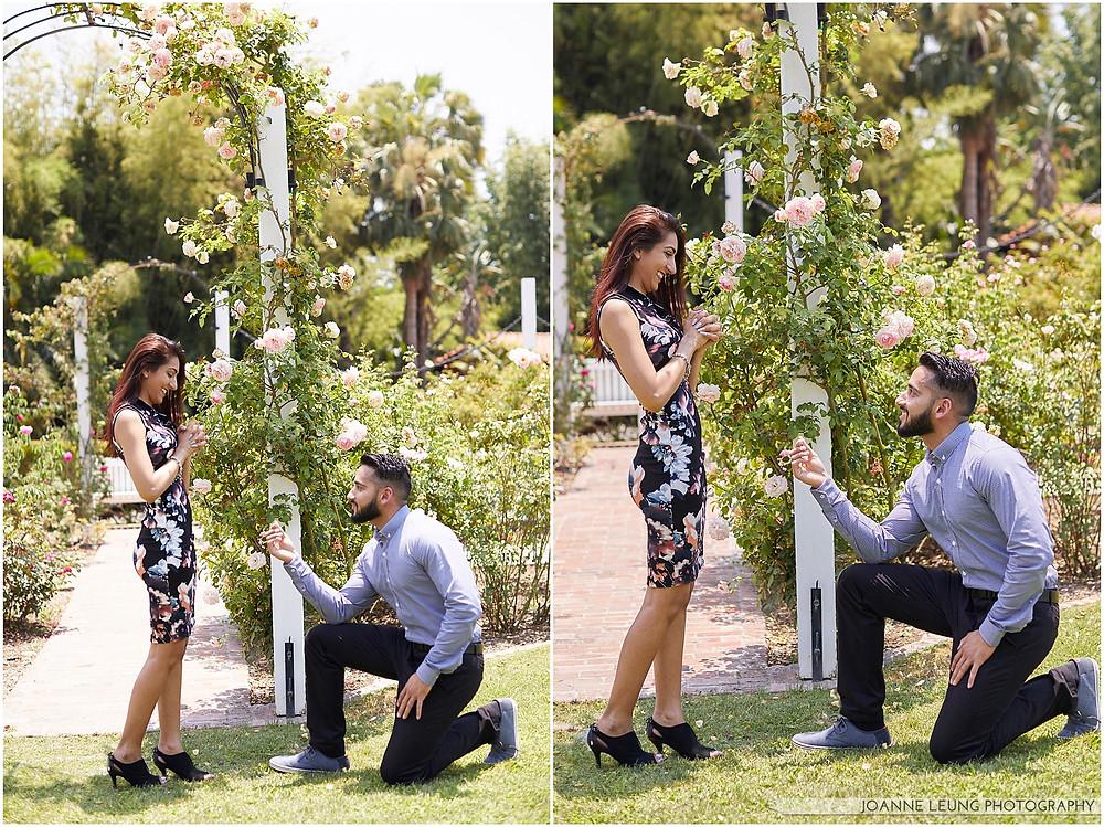 rose garden proposal