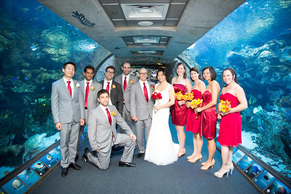 Long Beach Aquarium Wedding Party
