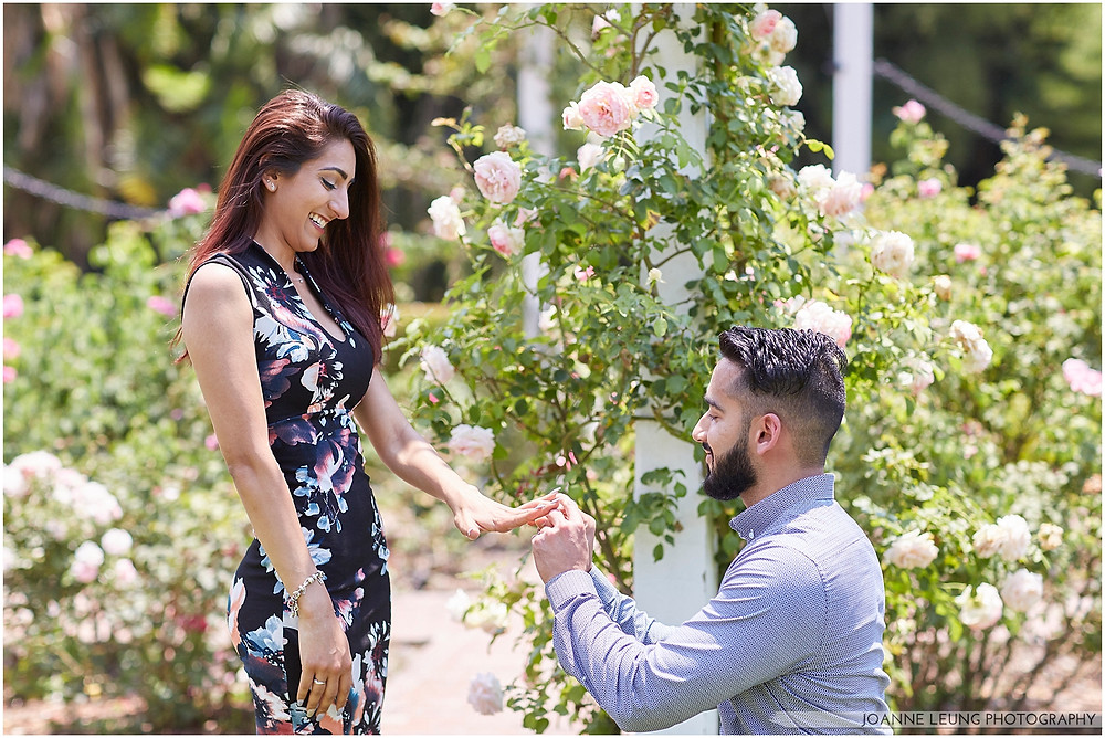 los angeles arboretum rose garden proposal