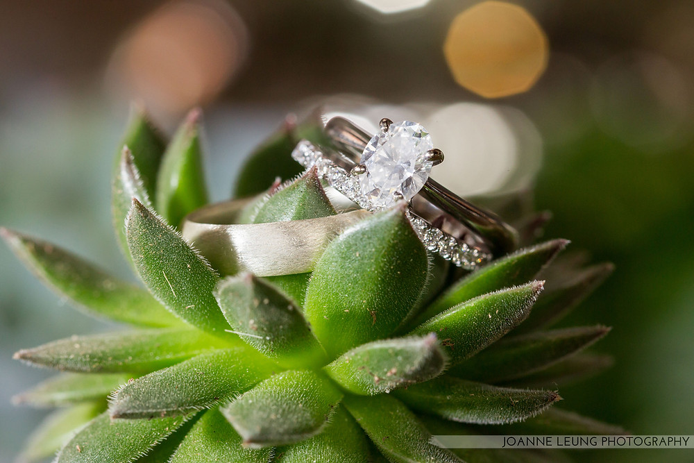 Wedding Rings on Succulent