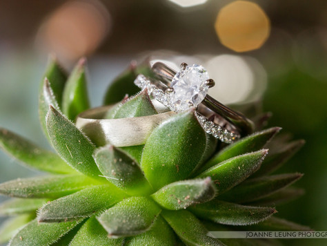 Succulents, the Eco Friendly Wedding Choice
