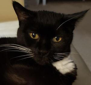 Photo of BETravel's cat ambassador Ava