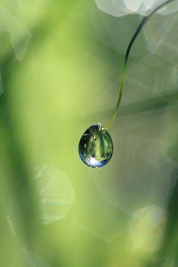 Dew on Vine Tendril