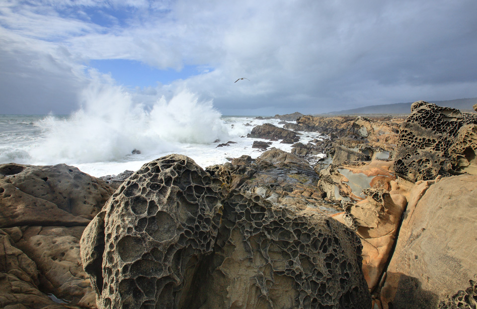 Breaking Wave and Tafoni, Salt Point