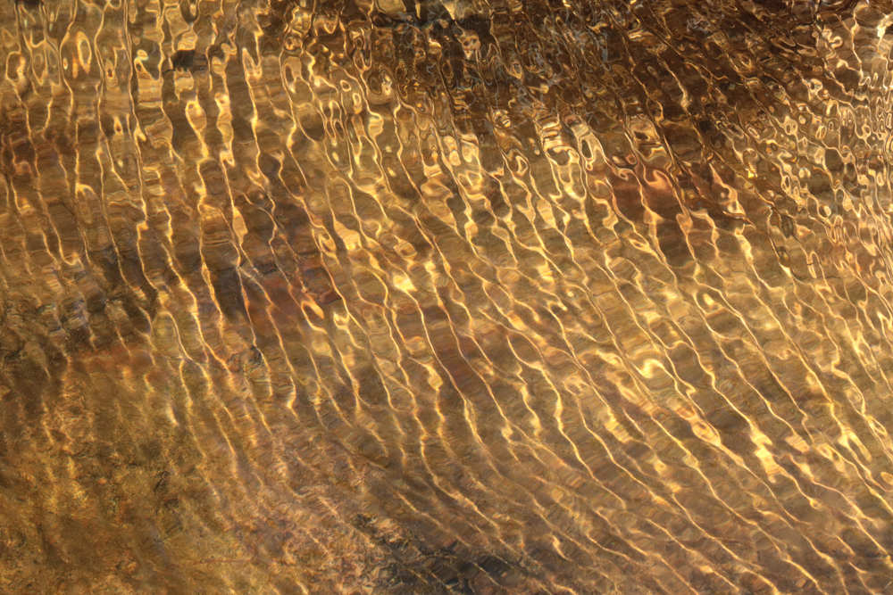 Water Ripples 1