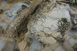 Tafoni Sandstone Formation