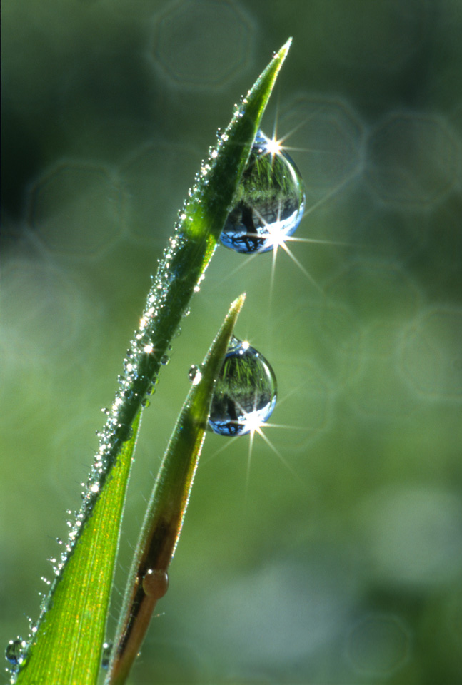 Refractions in Dewdrops on Grass