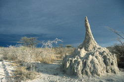 Termite Mound with Approaching Storm