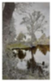 Narcisse, grattage sur photographie, 105
