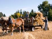 Harvest 2011-Fran (4).jpg