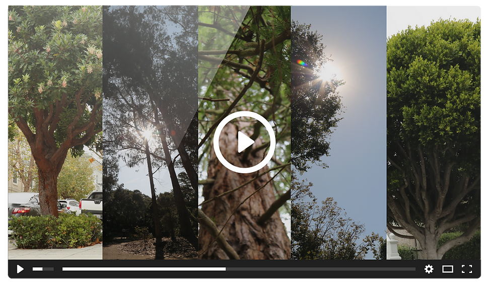 SnapshotsLive-VideoThumbnail 2-01.png