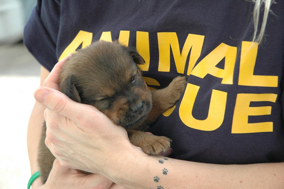 Animal-Rescue.jpg
