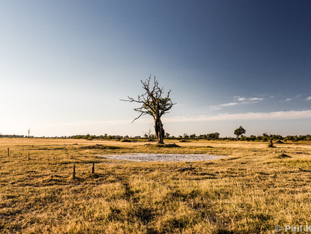 Okavango Delta / Kalahari - May-June 2019