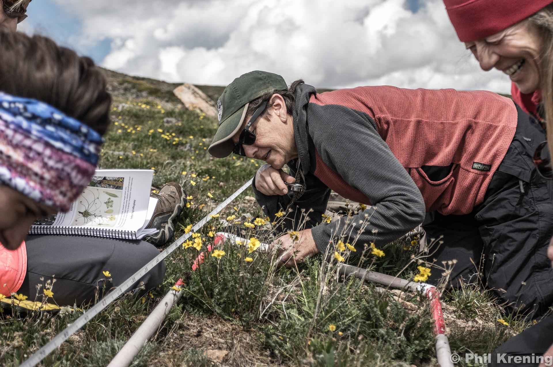Alpine vegetation research