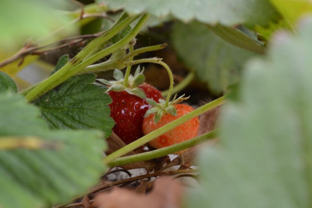 Rain Fresh Harvest